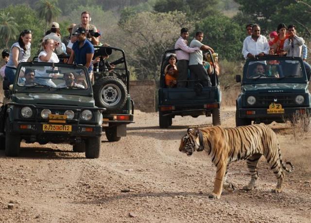 India Golden Triangle Tour Tiger Safari
