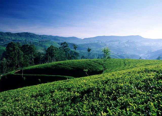 Sri lanka natur kultur meer sparen sie bis zu 70 for Nature et decouverte chambery