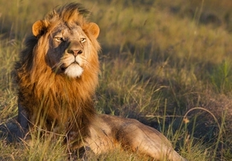 Guided trip in north-east South Africa with city, safari & beach, Johannesburg, Karongwe Reserve, Hazyview & Durban - save 30%