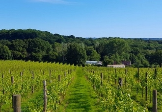 Sedlescombe vineyard stay with self-guided tour & tasting, Sedlescombe Golf Hotel, East Sussex - save 45%