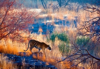Captivating India Golden Triangle tour with Rajasthan tigers, Delhi, Agra, Ranthambore National Park & Jaipur - save 39%