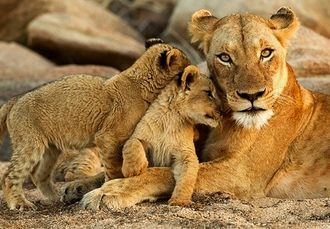 South Africa city & winelands holiday with epic game drives, Cape Town, Stellenbosch, Johannesburg & Kruger - save 21%
