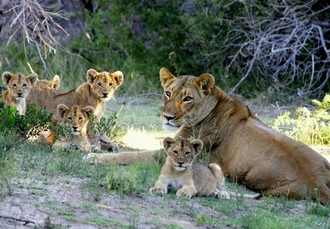 Incredible South Africa & Mauritius holiday, Cape Town, Hoedspruit, Johannesburg & Mauritius - save 21%