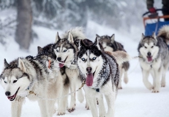 Lapland adventure with optional husky & Northern Lights safaris, Holiday Village Gulo Gulo, Finland - save 42%