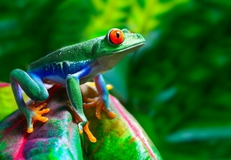 Unforgettable Costa Rica tour & beach holiday, San José, Sarapiquí rainforest, Arenal & Tambor - save 30%