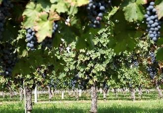 Lake Garda foodie break with cooking class & wine tasting, Hotel Angelini, Italy - save 23%