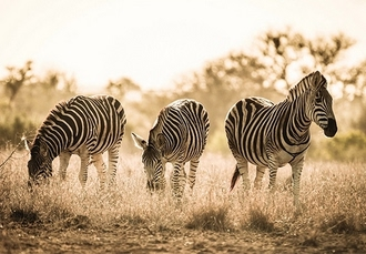 Classic South Africa getaway with safari excursions, Cape Town, Stellenbosch & Kruger - save 26%