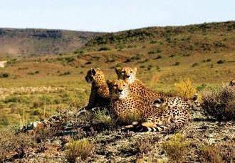 5* South Africa self-drive escape with Winelands & optional safari, Cape Town, Stellenbosch & Hermanus, plus optional Sanbona & Grootbos Reserves - save 25%