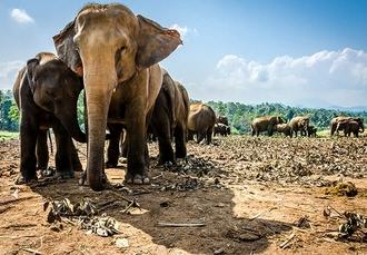 Sublime Sri Lanka tour with wildlife safari, Dambulla, Kandy, Nuwara Eliya, Udawalawe & Wadduwa - save 37%