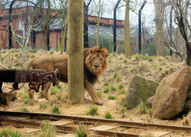 gir lion lodge regent 39 s park london save 21 21 off. Black Bedroom Furniture Sets. Home Design Ideas