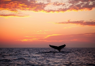Luxury Iceland suite stay with whale-watching & optional tours, Reykjavik Marina Residence, Reykjavik - save 45%