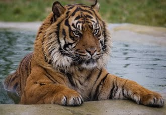 WHF - The Big Cat Sanctuary, An amazing Big Cat encounter in Ashford, Kent - save 34%